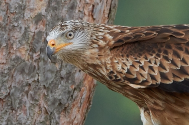 © https://www.ru4change.net/wildlifephotography